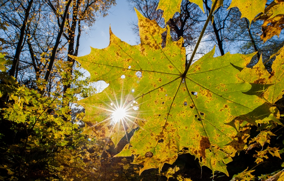 Sonniger Herbst in Hannover