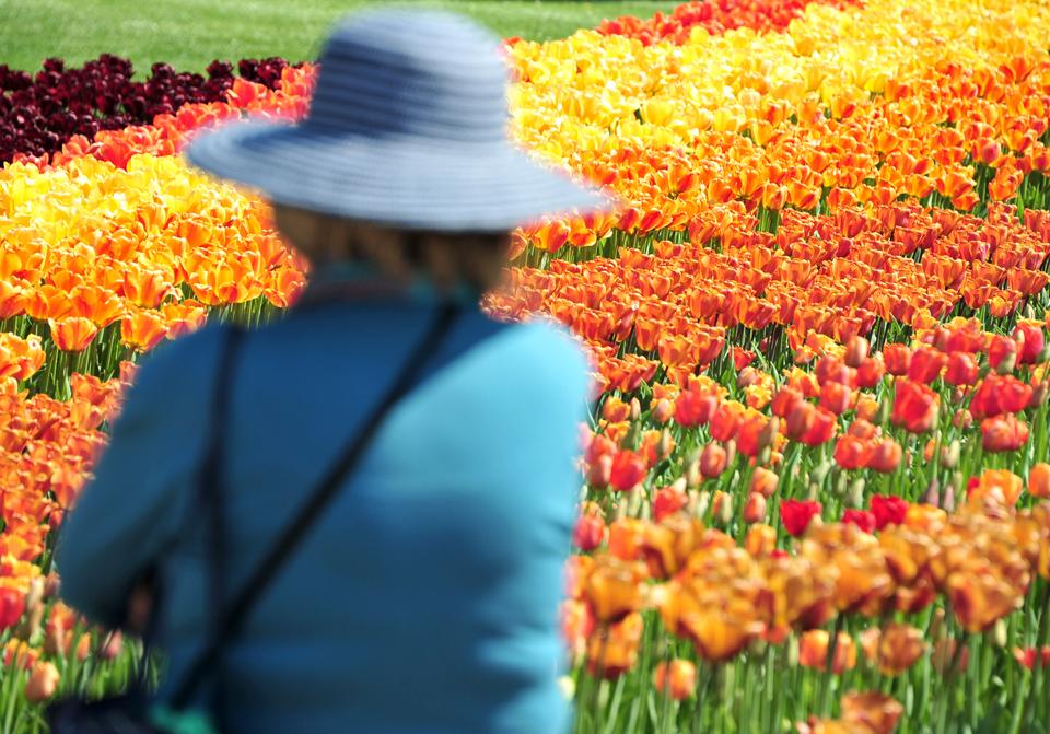"""Eröffnung der Tulpenschau """"Tulipan im Britzer Garten"""""""