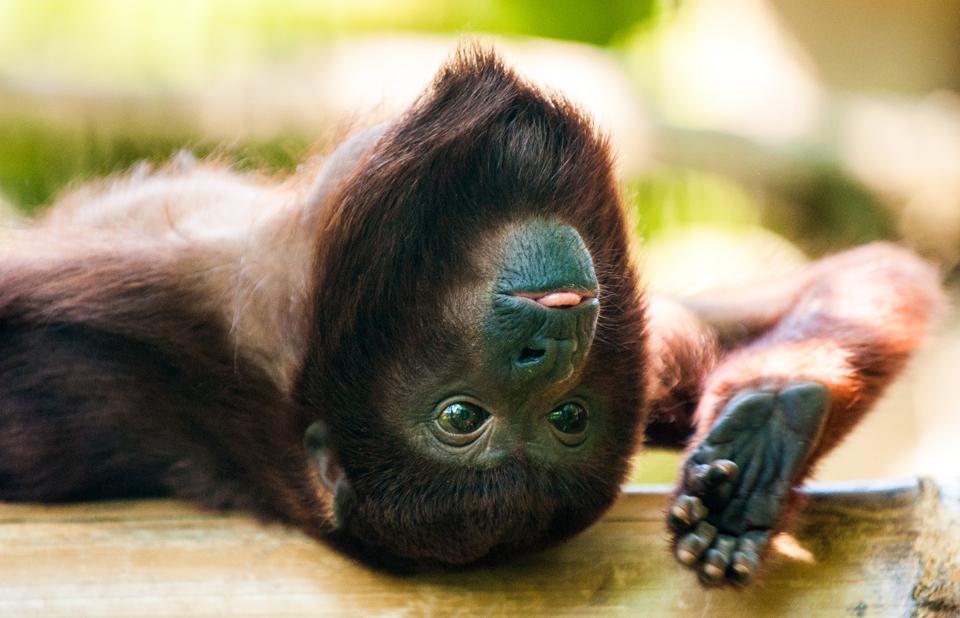 Neue Affen-WG im Tierpark Berlin